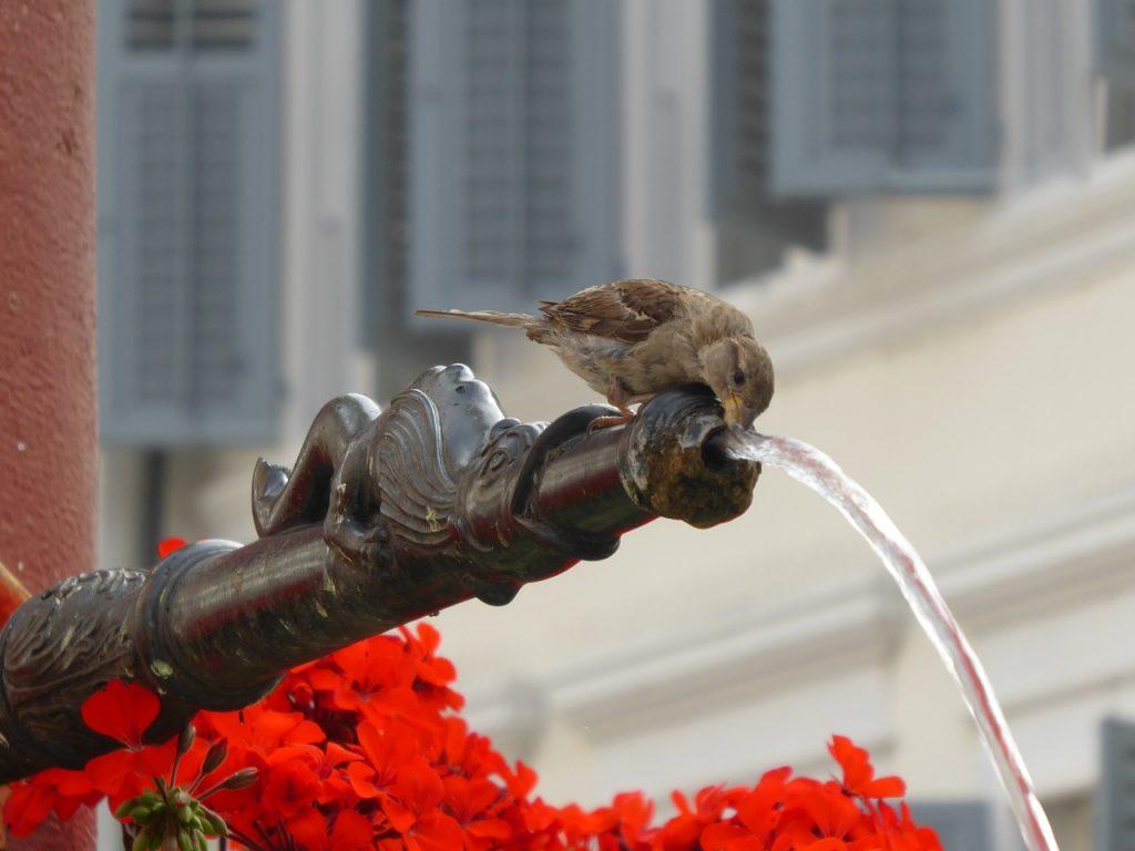 eau-enjeu-vital-pour-la-planete-verneco-environnement-quotidien